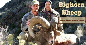 slider-bighorn-sheep