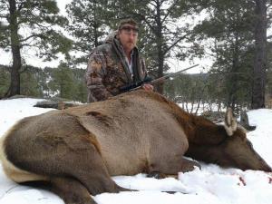 elk-cow1