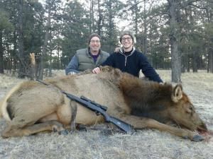 elk-cow2